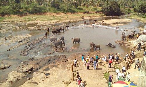 Elephants enjoying a dip...