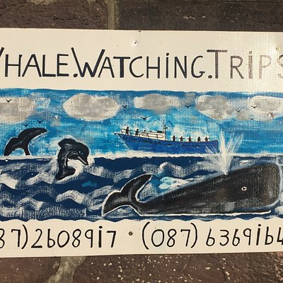 Our skipper's own work of art advertising whale watching boat trips off Dunmore East, Co. Waterf