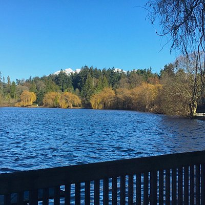 View from the Nature House over Lost Lagoon