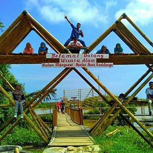 Gerbang selamat datang magrove😍