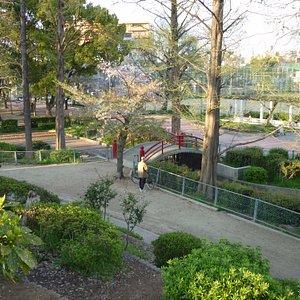 公園内の小高い山から太鼓橋を望む。