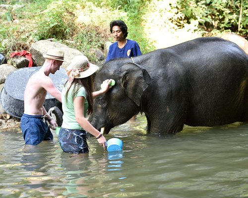 Time to enjoy with the elephant