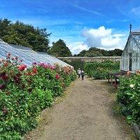Clovelly Court Gardens