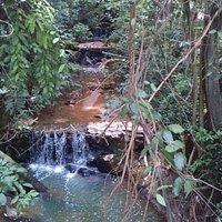 Riacho que cerca o Bosque