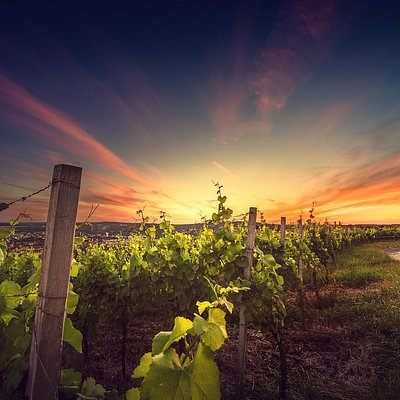 Sunset wine tour. One of a kind experience. A romantic wine experience!!!