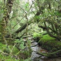 Trekking en el Bosque Encantado. Paisaje de fantaciencia!