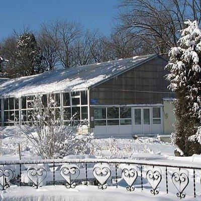 Ботанический сад сейчас в снегу