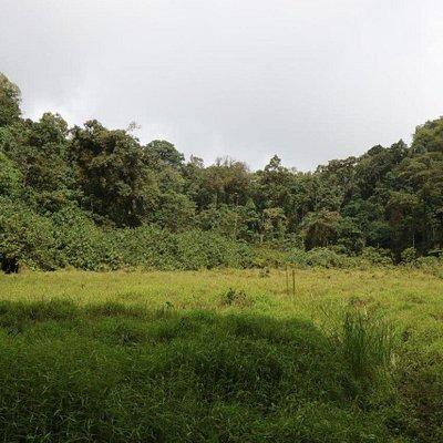 Lagoa de Amelia with a grass-covered surface