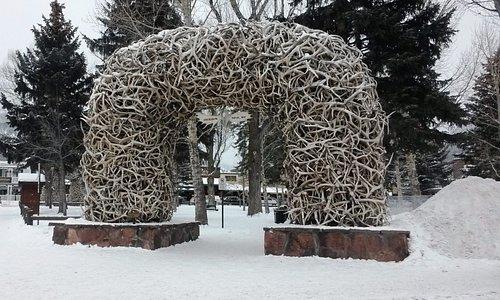 Antlers from Elk