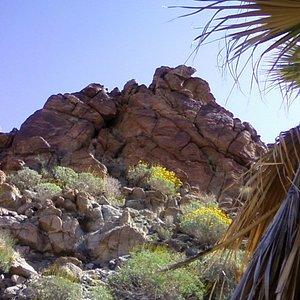 1st Palm Oasis