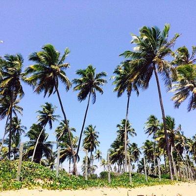 Conqueiros em frente a praia