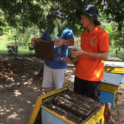 Guide showing us how to harvest honey and the bee boxes