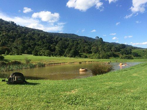 relaxing in the dam. Beautiful bush all around.