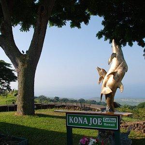 Kona Joe's coffee plantation