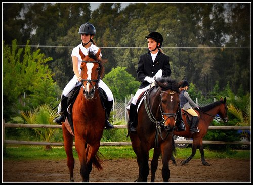Horse Riding lessons for the kids