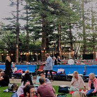 Picnic under the pines