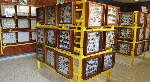 Insectos de 140 países del mundo en exihibicion.