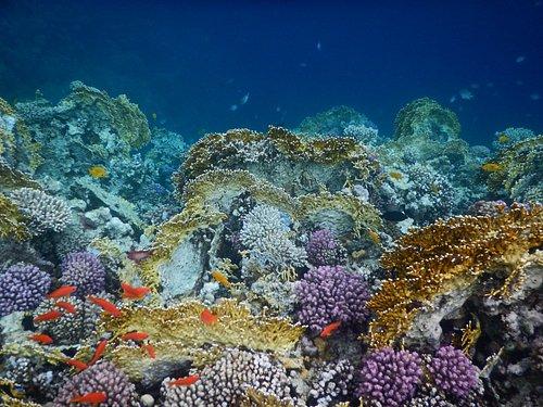 Korallenvielfalt in Sharm El Naga