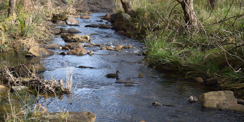 Sturt River