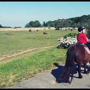 Balade à poney (Atelier Poils & Plumes)