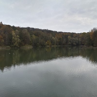 Forêt de Carnelle