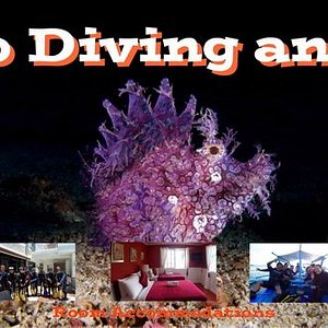 Anilao is the best destination of diving in terms of Underwater Photography and  Dive Courses.