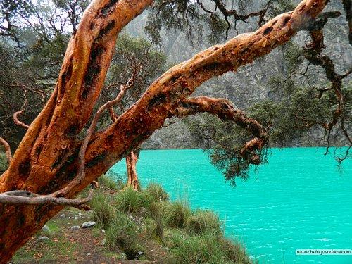 Laguna Llanganuco (Chinacocha)
