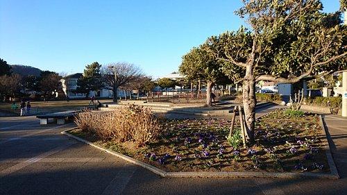 公園と花壇