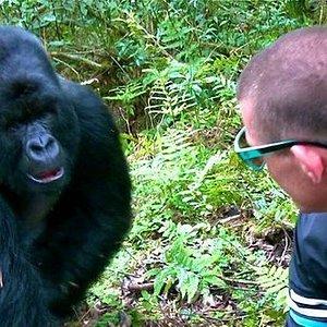 Meet gorillas in the mist.  www.gorillabookings.com