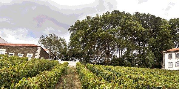 Aneto Winery