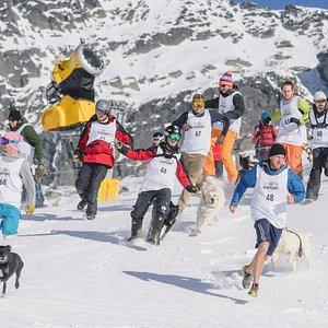 Dog Derby - Queenstown Winter Festival
