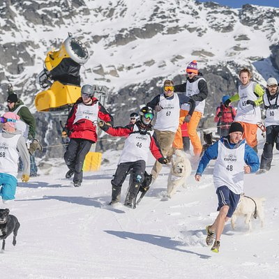 Dog Derby - Queenstown Winter Festival