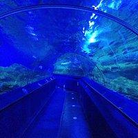 トンネルです