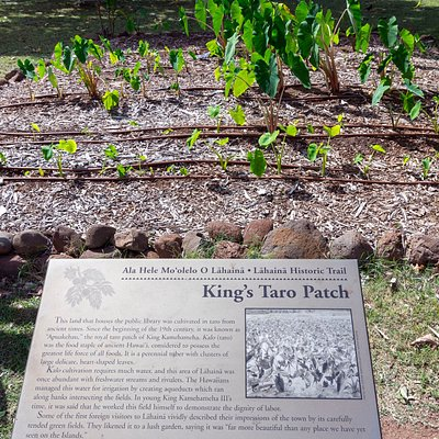 Restored taro patch and its information plaque