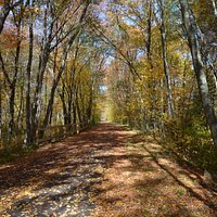 October fall foliage on the trail