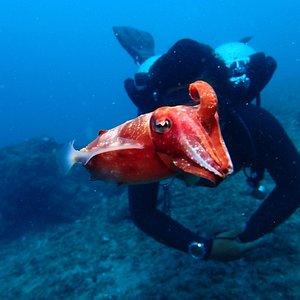 Hello cuttlefish face!