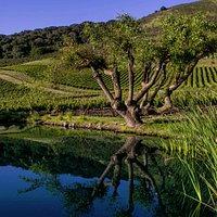 Free self-guided vineyard tours