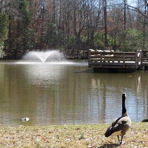 Fountain in the lake