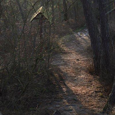 ścieżka prowadząca na garb
