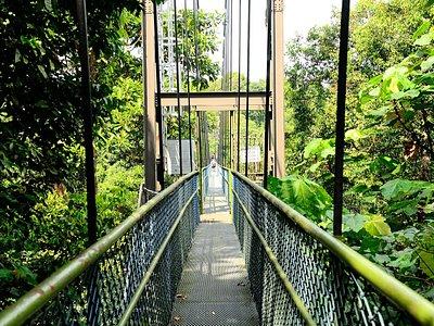 麥里芝自然小徑(樹間吊橋)
