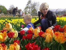 Vanaf begin april zelf Tulpen plukken met bol en al!!