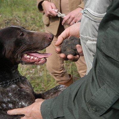 Cane da tartufo - Truffle dog