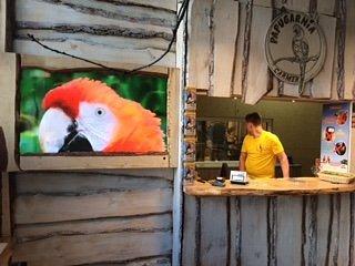 Papugarnia-Carmen