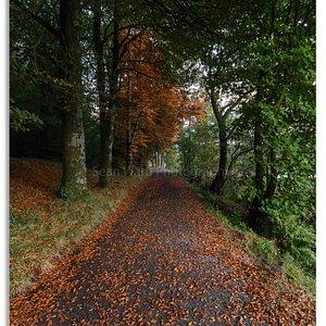Castle Lake walk in Autumn