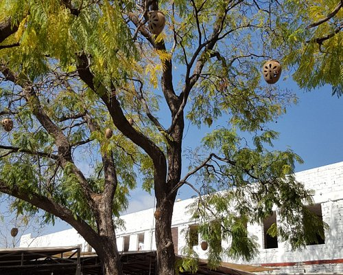 Majestic ahuehuete tree in the patio of Indigenous Handicraft center CEDAI