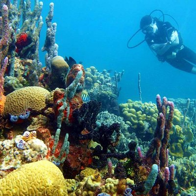 Lots of reef, fish, clear water, warm water, great caribbean diving with Barracuda Dive Cartagen
