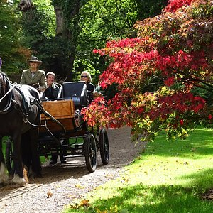 Autumn Colour in Chapel Wood, Windsor Great Park