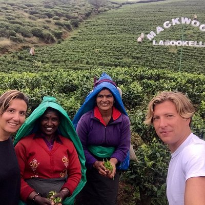 Tea Plantation with Maree & Jean - customers visiting from France
