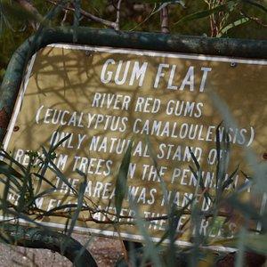 Gum Flat sign
