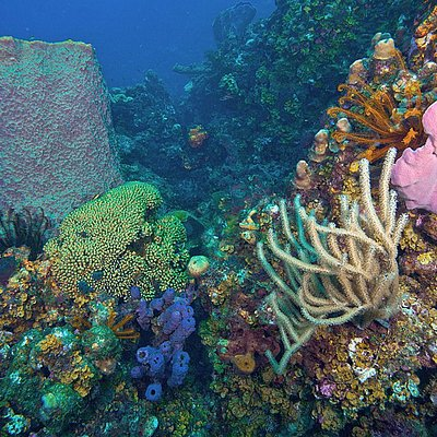 Colorful reefs loaded with Crinoids